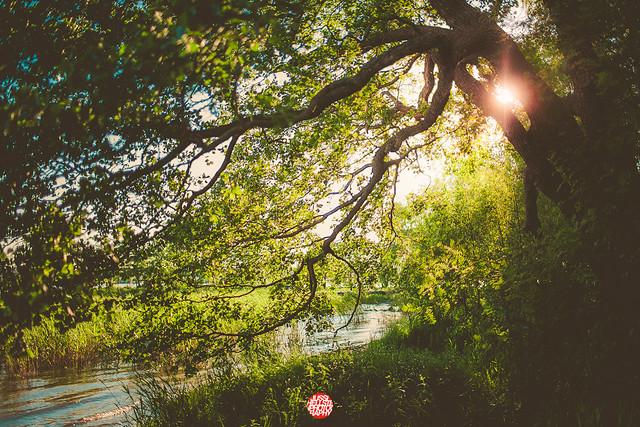 175/365 Sun And Tree
