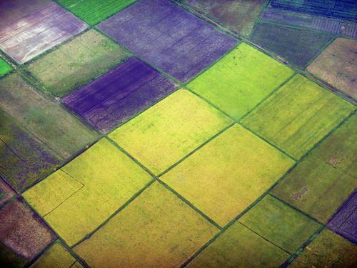 the Patchwork Fields Seen while Flying over Inle Lake