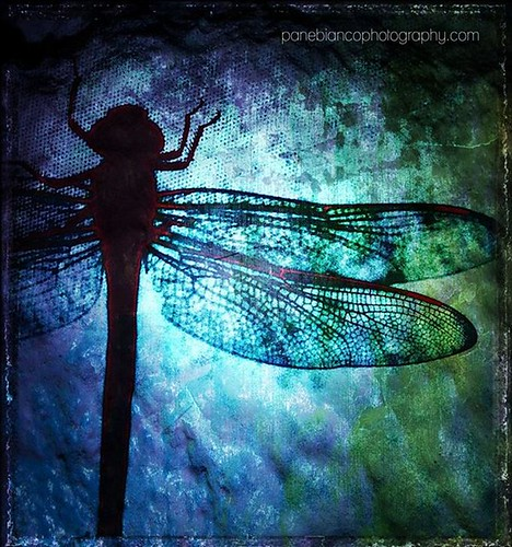 Cathy Panebianco - Dragonfly