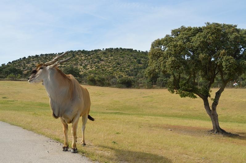 lara-vazquez-madlula-blog-inspiration-fashion-life-safari-madrid