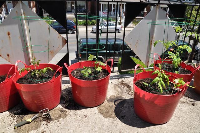 garden, may 25 2014