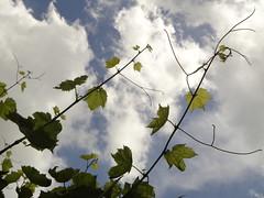 Συννεφιά, δυνατοί άνεμοι, βροχή κατά διαστήματα το σκηνικό των πρώτων ημερών του φετινού καλοκαιριού στη Ψίνθο