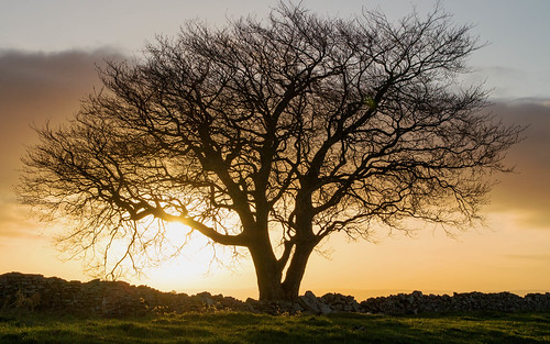 morning sun tree tower silhouette southwales wales sunrise canon lens landscape eos dawn photo flickr image cloudy sigma folly torfaen pontypool 700d