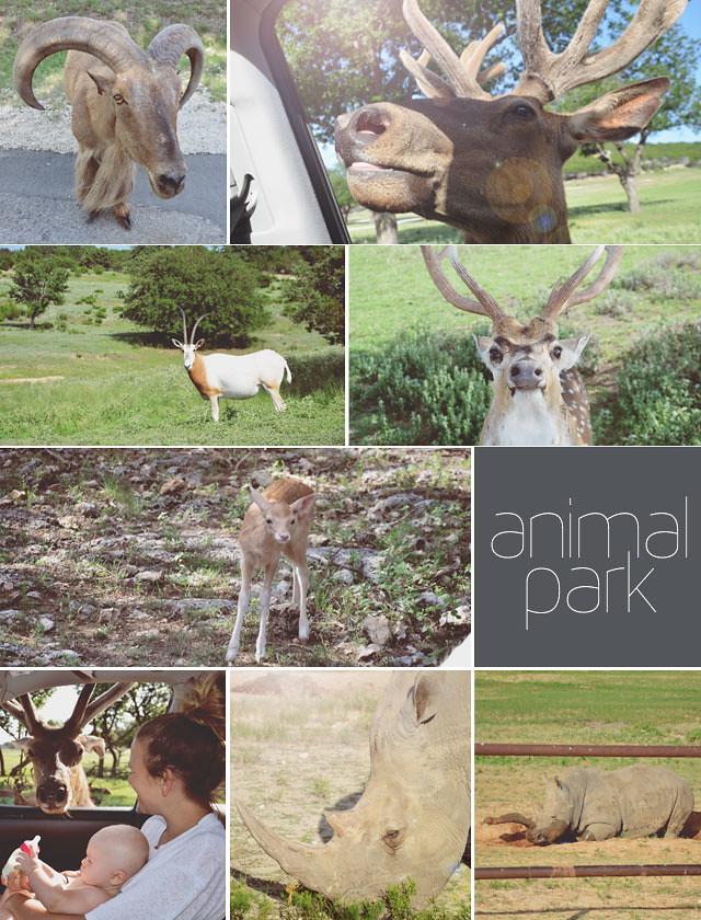 animal-park
