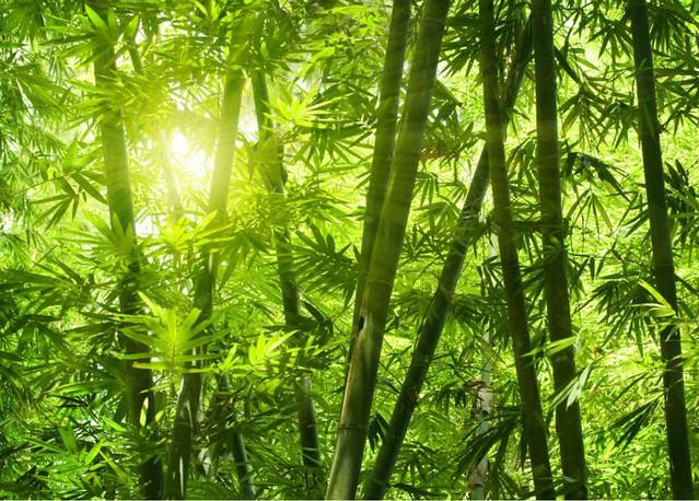1_bamboo-diarioecologia.jpg
