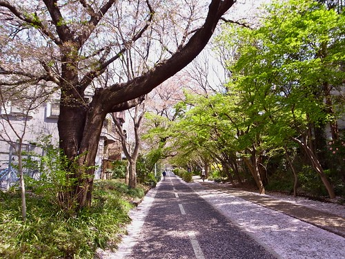 Tamako Cycling Road