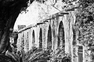 Alamo wall (B&W)