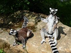 Zoo Plzeň: V království (nejen) lemurů kata
