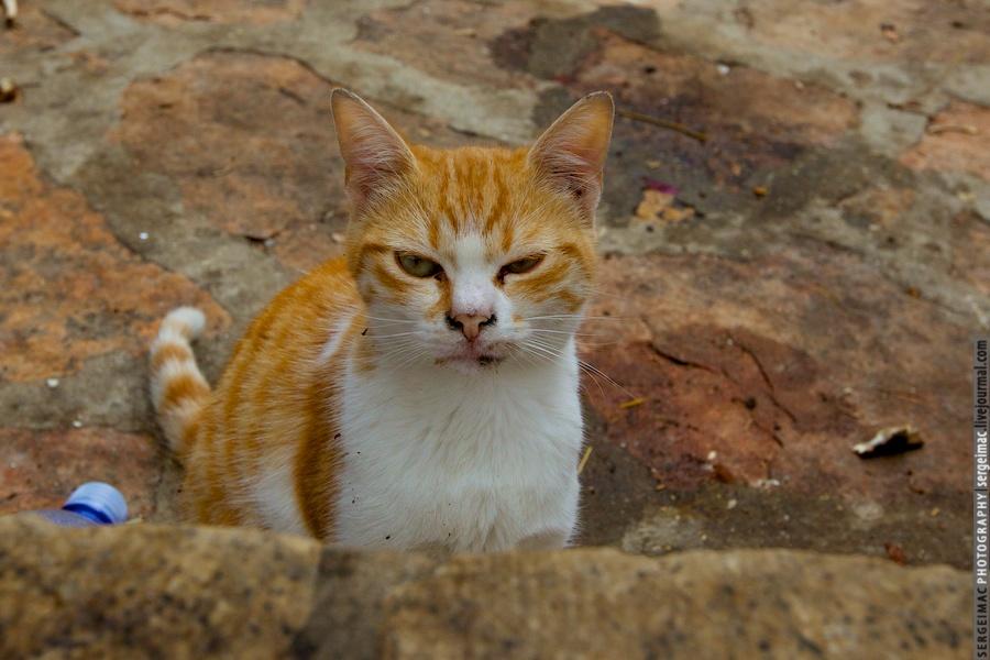 20111012_CAT_034