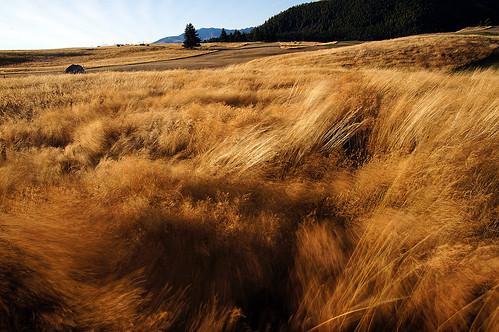 Wind blown landscape.