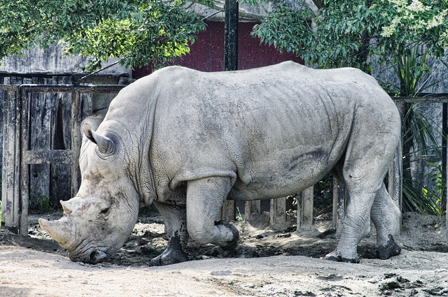 TOBU ZOO rhinoceros
