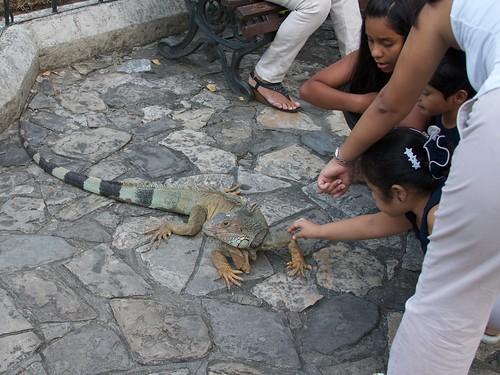 Iguanas 24