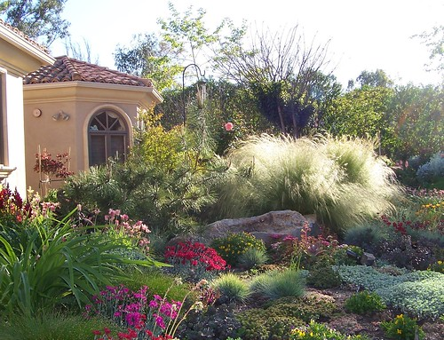 Profusion-of-drought-tolerant-perennials-and-grasses1