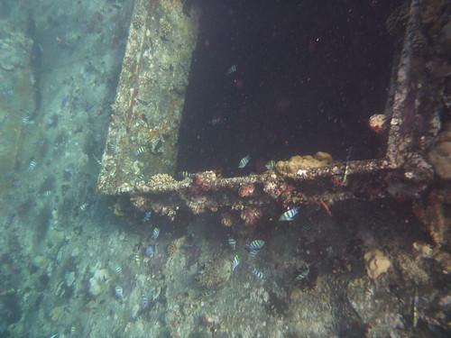 Kunagine laev on nüüd korallidega kaetu by elviina