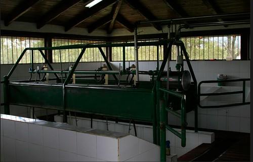 Cotacachi-dairy-images