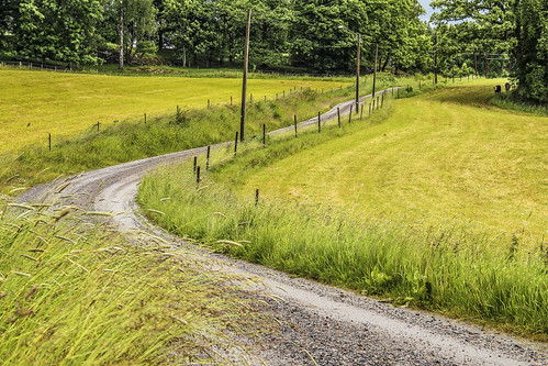 summer colors canon fence landscape cows sweden country fields dirtroad gravelroad landskap countryroads intouchwithnature grusväg 100commentgroup canon600d peternyhlén mygearandme