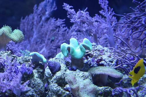 sumida_aquarium7