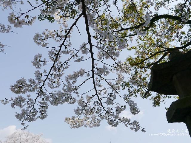 20140327山陽D2熊本-1120934