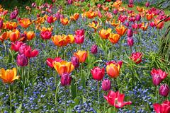 Dorothy Clive Memorial Garden Staffordshire