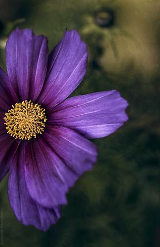 In the garden // 10 06 14