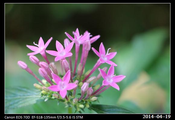 20140419_Flowers3