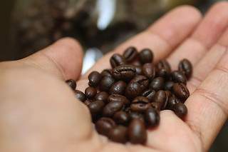 Philippines Civet Coffee - Coffee beans