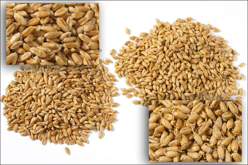 1_пшеница-и-пророщенная_DSC02968