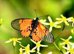 Goggas insekte en so