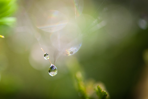 106 water droplet
