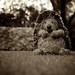 Hedgehog (132/365)