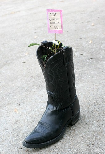Gift Plant In A Cowboy Boot