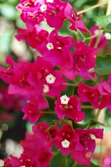blossom(0.0), shrub(0.0), gladiolus(0.0), macro photography(0.0), annual plant(1.0), flower(1.0), plant(1.0), flora(1.0), snapdragon(1.0), pink(1.0), petal(1.0),