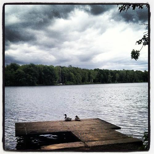 Lieblingssteg ist heute schon besetzt....  #6_Seenplatte #Duisburg #Ruhrgebiet
