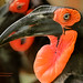 Southern Ground Hornbill at Zoo Atlanta, Georgia by D200-PAUL -- On Holiday through Mid October