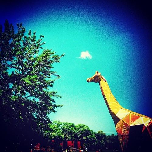 Urban Wildlife cc @_alinaavk