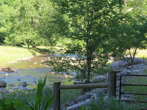 trees rivers creeks