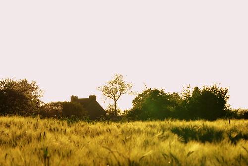 bretagne breizh paysage champ prés blé guingamp argoat