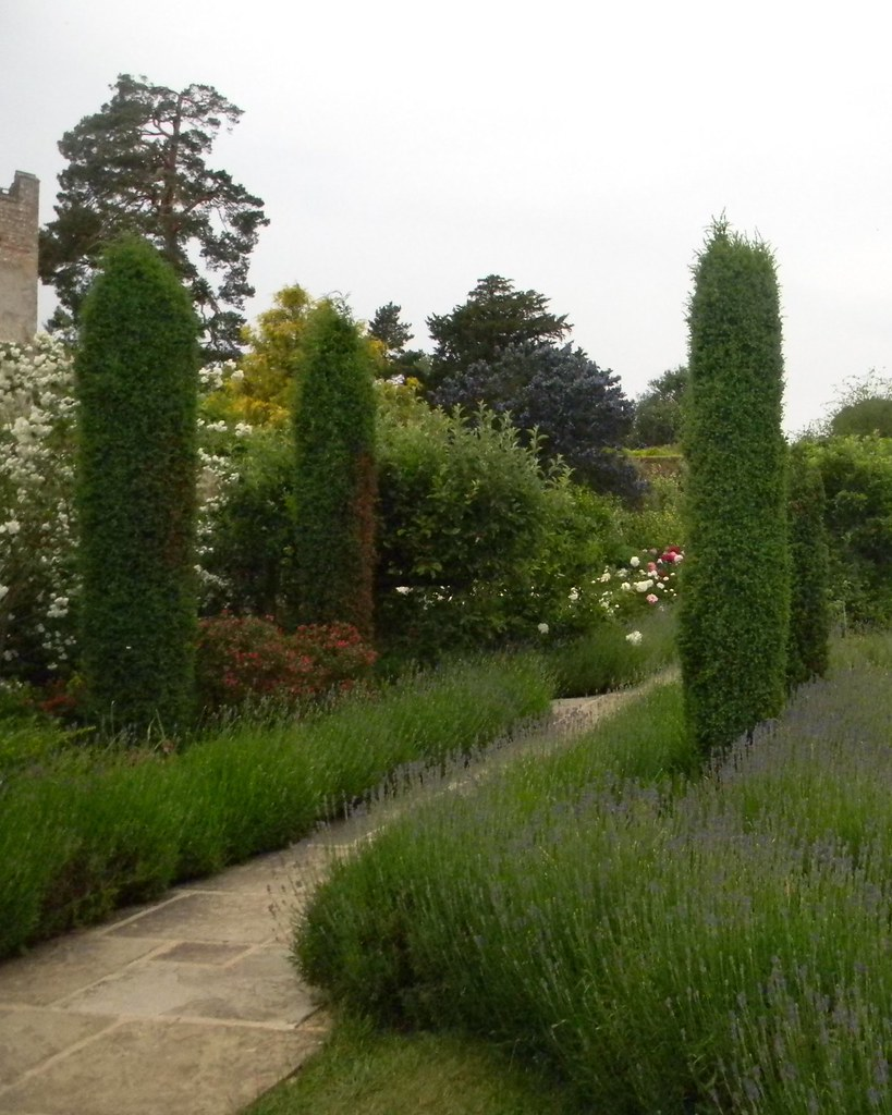 Lavender garden Grey's Court, Shiplake to Henley