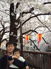 とらちゃんと花見@目黒川(2012/4/9)