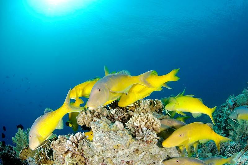 Bucear en Jackson Reef