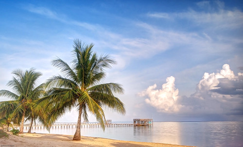 lynch tree beach tom america sunrise photography central honduras palm roatan hdr pixbytommy