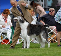 hound(0.0), dog sports(1.0), animal sports(1.0), animal(1.0), silken windhound(1.0), dog(1.0), sports(1.0), pet(1.0), mammal(1.0), conformation show(1.0), borzoi(1.0),