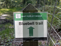 Foxley Woods May 2014