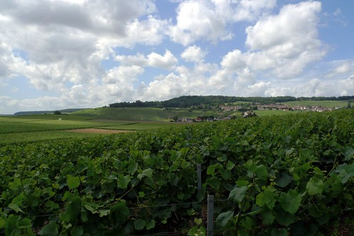 Vineyards at Moët