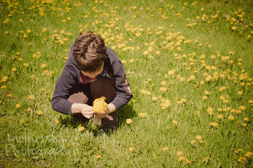Simon in the dandelions