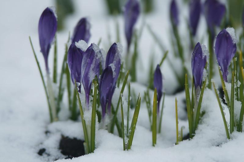 spring 004