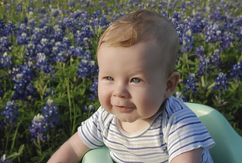 Sebastian in the bluebonnets