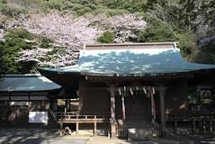 Sunozaki shrine at tateyama (洲崎神社・館山)