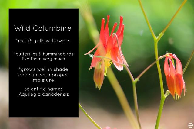 Wild Columbine Bio