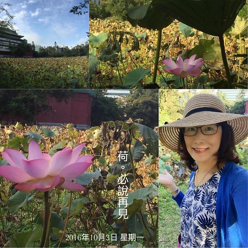 2016-10-03[荷花]植物園